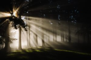 light-into-darkness-ctrnorthshore-org